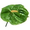 Πράσινο Aνθούριo