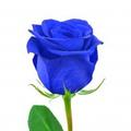 Μπλε Τριαντάφυλλο