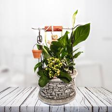 Μεσαίο πηγαδάκι λουλουδιών