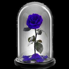 Παντοτινό τριαντάφυλλο - Μπλε