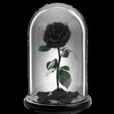 Παντοτινό τριαντάφυλλο - Μαύρο